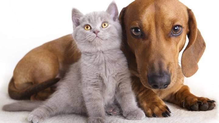 σκυλοσ γατα