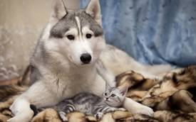sweet_dog_and_cat_1920x1200